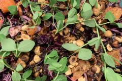 julefrokost-buffet-rødkaal-salat